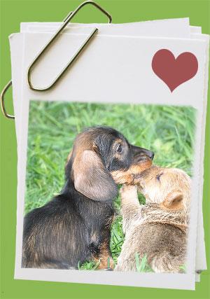 щенок и взрослая собака знакомство